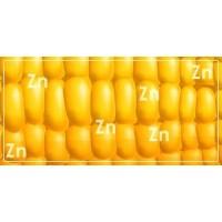 Цинк на посівах кукурудзи