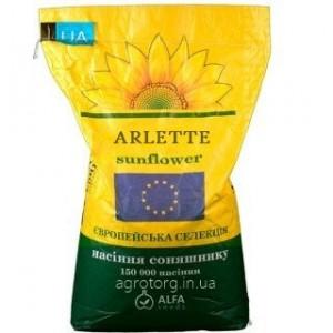 Арлет соняшник