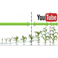 В яку фазу вносити гербіцид на кукурудзу?